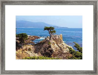 Lone Cypress Framed Print by Lou Ford