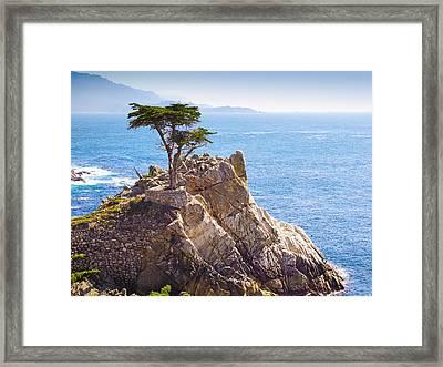Lone Cypress Framed Print by Lutz Baar
