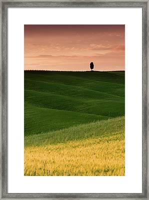 Lone Cypress Framed Print by Michael Blanchette