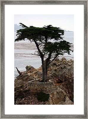 Lone Cypress Framed Print