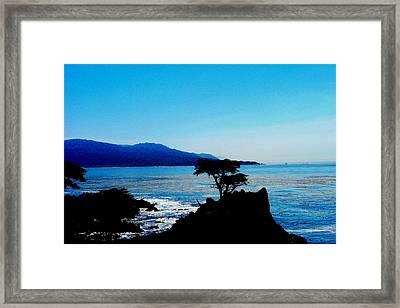 Lone Cypress Tree - Pebble Beach Ca Framed Print