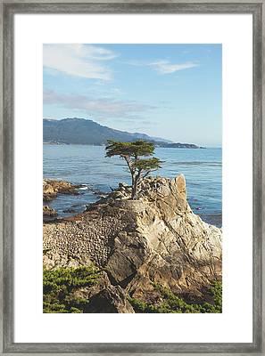 Lone Cypress Tree In Carmel 3 Framed Print by Ariane Moshayedi