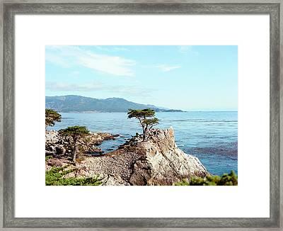 Lone Cypress Tree In Carmel Framed Print by Ariane Moshayedi