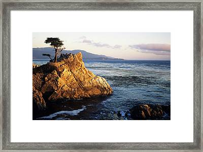 Lone Cypress Tree Framed Print by Michael Howell - Printscapes