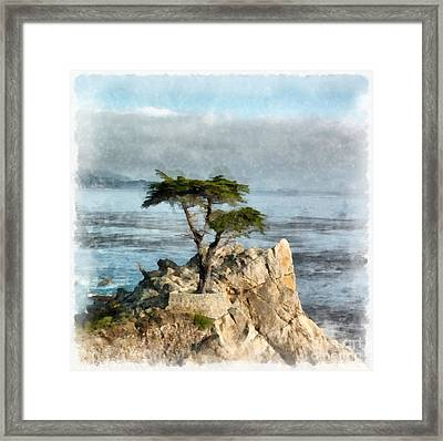 Lone Cypress Watercolor Framed Print by Edward Fielding