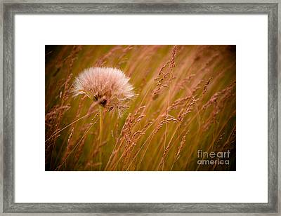 Lone Dandelion Framed Print by Bob Mintie