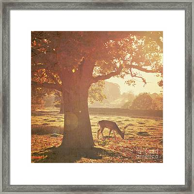 Framed Print featuring the photograph Lone Deer by Lyn Randle