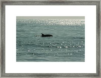 Lone Dolphin Framed Print by Allan Levin