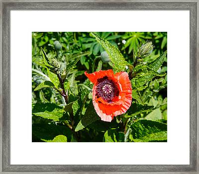 Caught My Eye Framed Print