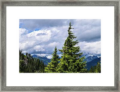 Lone Fir With Clouds Framed Print