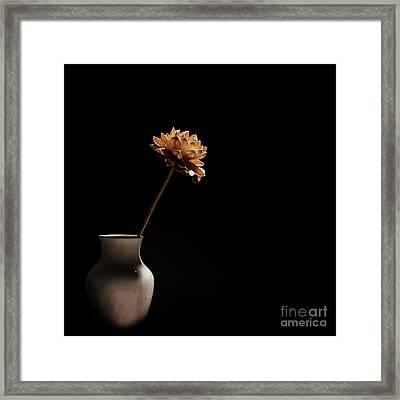 Lone Flower Framed Print