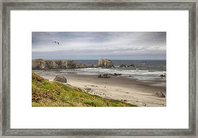 Lone Gull - Bandon Beach Framed Print