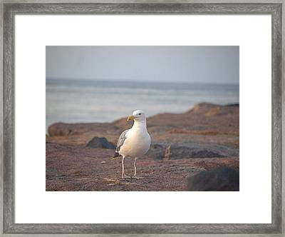 Framed Print featuring the photograph Lone Gull by  Newwwman
