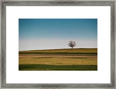 Lone Hawthorn Tree II Framed Print