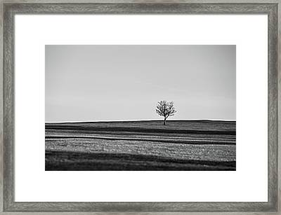 Lone Hawthorn Tree Iv Framed Print by Helen Northcott