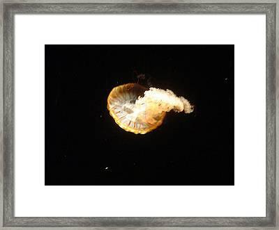 Lone Jellyfish Framed Print by Paula Ferguson