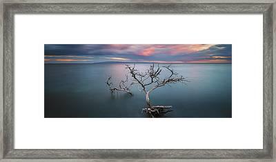 Lone Kiawe Framed Print by Todd Kawasaki