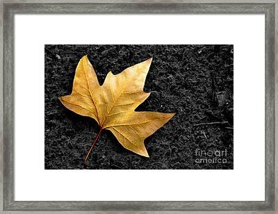 Lone Leaf Framed Print by Carlos Caetano