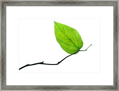 Lone Leaf Framed Print by Dan Holm