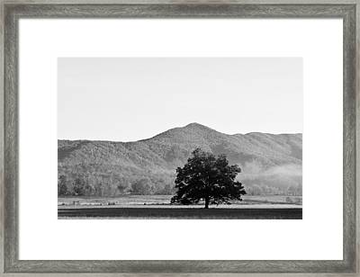 Framed Print featuring the photograph Lone Mountain Tree by Bob Decker