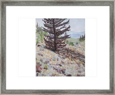 Lone Mountain Tree Framed Print by Hal Newhouser