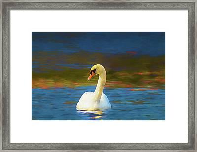 Lone Mute Swan. Framed Print