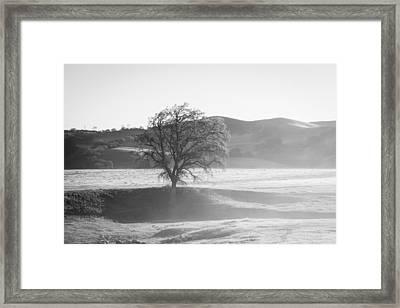 Lone Oak, Clearing Fog, San Andreas Rift Valley Framed Print