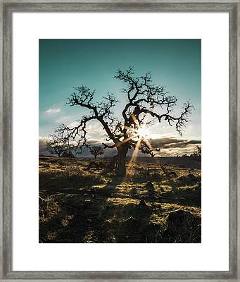 Lone Oak Framed Print by Lee Harland