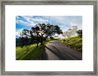 Lone Oak On Figueroa Mountain Road Framed Print
