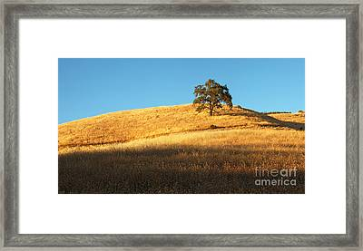 Lone Oak Tree Framed Print