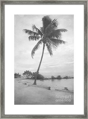Lone Palm Lagoon Framed Print by Benanne Stiens