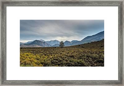 Lone Pine Framed Print by Joseph Smith