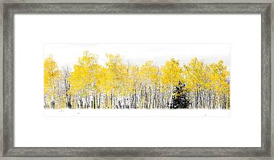 Lone Pine Framed Print by The Forests Edge Photography - Diane Sandoval