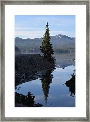 Lone Pine Reflection Chambers Lake Hwy 14 Co Framed Print