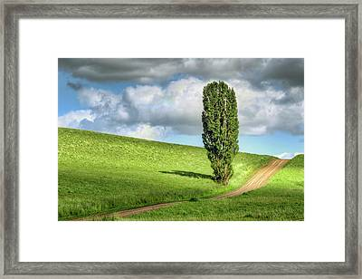 Lone Poplar And Road Framed Print by Nikolyn McDonald