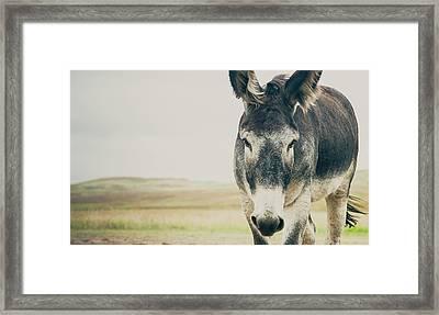 Lone Ranger Framed Print by Cynthia Traun