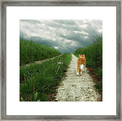 Lone Red And White Cat Walking Along Grassy Path Framed Print