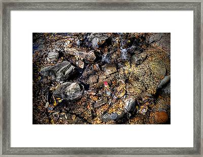 Lone Red Leaf Framed Print