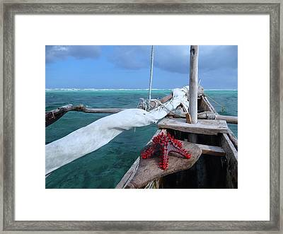 Lone Red Starfish On A Wooden Dhow 1 Framed Print