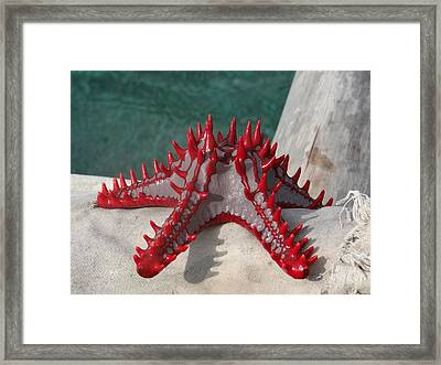 Lone Red Starfish On A Wooden Dhow 3 Framed Print