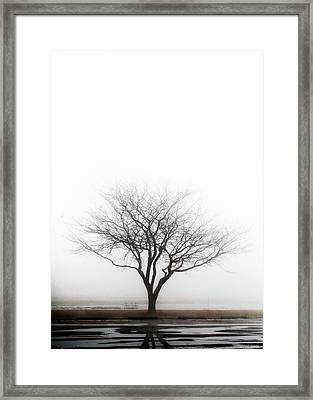 Lone Reflection Framed Print
