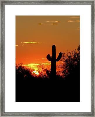 Lone Saguaro Sunrise Framed Print