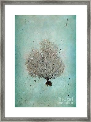 Lone Sea Fan Framed Print