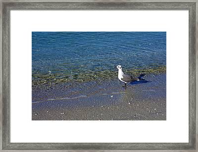 Lone Seagull At Miramar Beach In Naples Framed Print