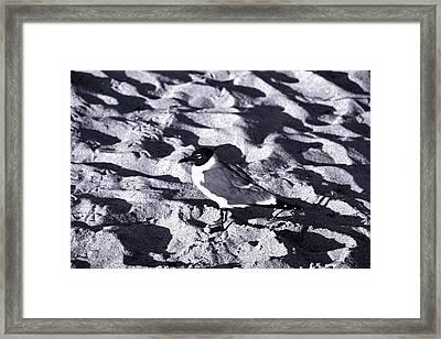 Lone Seagull Framed Print