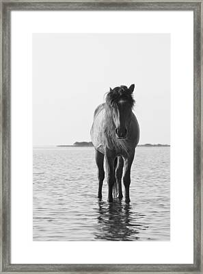 Lone Stallion Framed Print by Bob Decker