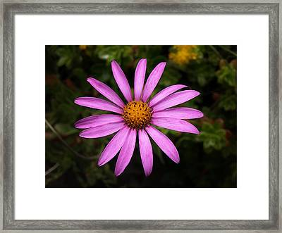 Lone Star Framed Print
