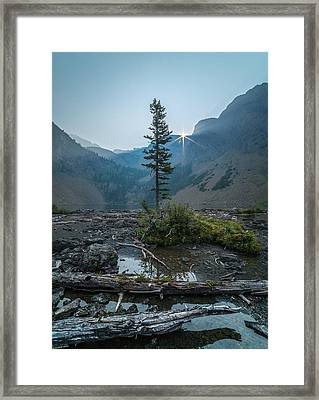 Lone Survivor // Bob Marshall Wilderness  Framed Print
