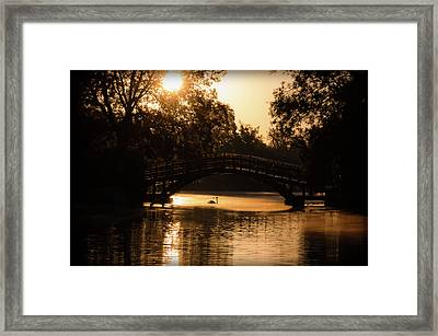 Lone Swan Up For Dawn Framed Print