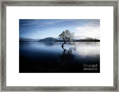Lone Tree 2 Framed Print
